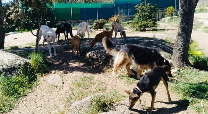 Cuidadora Madrid Noroeste, canguro en Galapagar, España