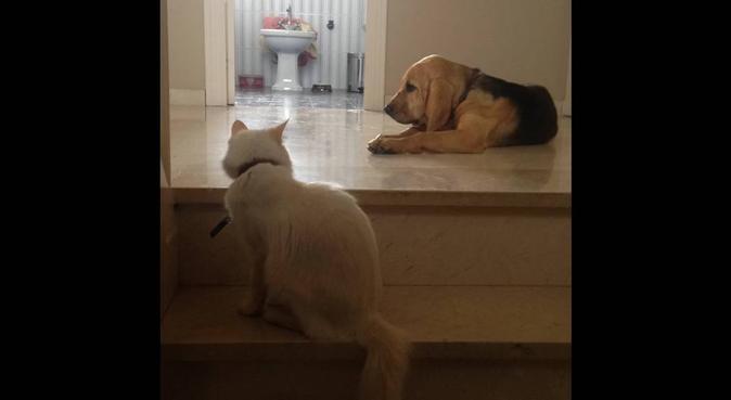 Un hogar para cuando usted esté de viaje., canguro en Sevilla