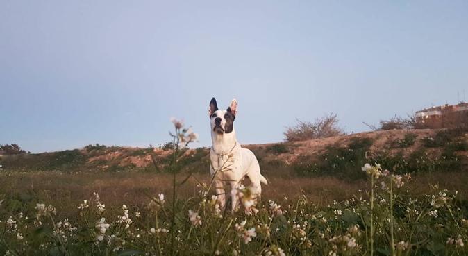 Tu perro en buenas manos, mucho cariño y amor, canguro en Alicante