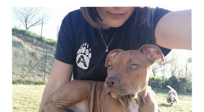 premura,amore e tante passeggiate da fare insieme, dog sitter a Perugia, PG, Italia