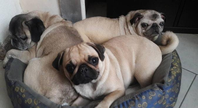 TE LO COCCOLIAMO NOI !!!, dog sitter a torino