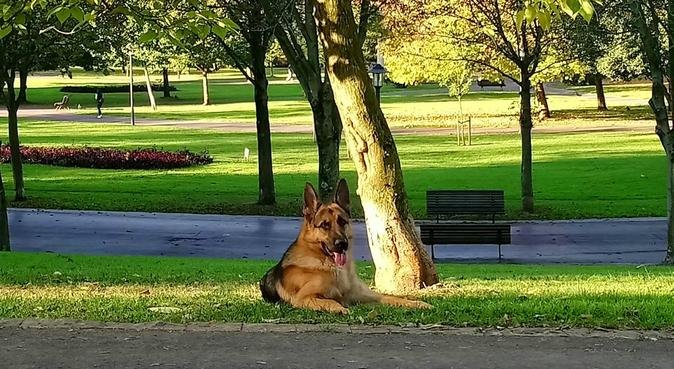 Cuidador canino en Bilbao, canguro en Bilbao