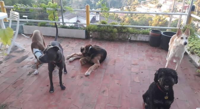 Tu perro estará,casi como con tigo., canguro en Granada, España