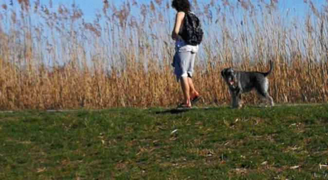 Doglover(dogwhisperer) in Schiedam, hondenoppas in Schiedam