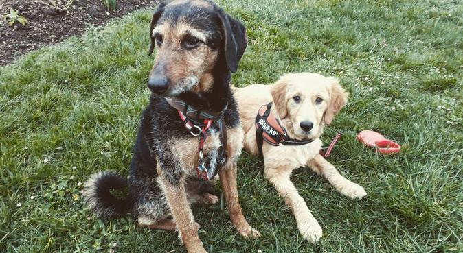 🐶 Pour que deux chiens se rencontrent 🐶, dog sitter à Metz, France