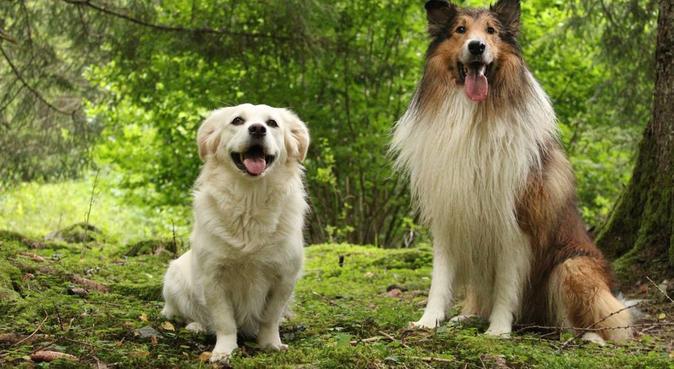 Tutto ciò che faresti per il tuo cane, dog sitter a Parma