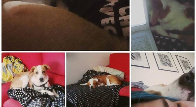 Alessia; los animales son vida., canguro en Barcellona