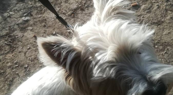 Garde et promenade pour petits chiens, dog sitter à Boulogne-billancourt