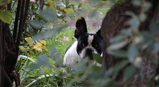 Le bien être de vos animaux avant tout, dog sitter à Aix-en-Provence