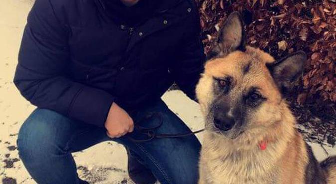 En aktiv, omsorgsfull hundpassning i centrala Lund, hundvakt nära Lund