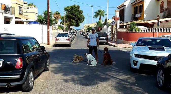 Dog Sitters Torrevieja, canguro en Torrevieja