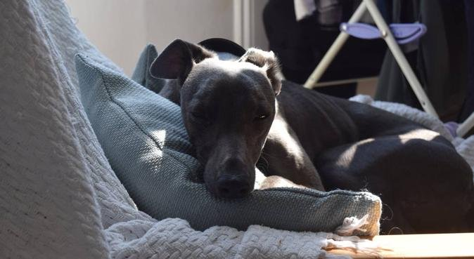 Happy Dogs Hipperholme!, dog sitter in Halifax