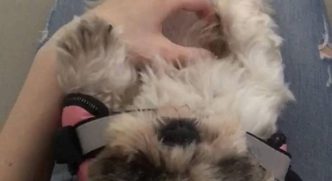 Amore, svago e compagnia!, dog sitter a Milano, MI, Italia