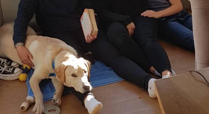 Southside based student deprived of her own dog!!, dog sitter in Glasgow