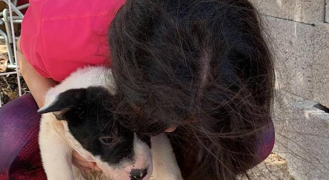 Amor para tu perro, tranquilidad para ti, canguro en Valencia