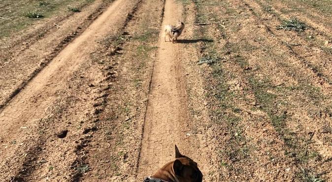 Tu perro estará feliz y tú estarás tranquilo!, canguro en Paracuellos de Jarama