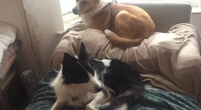 Dog sitter and walker in Bristol, dog sitter in Bristol, UK