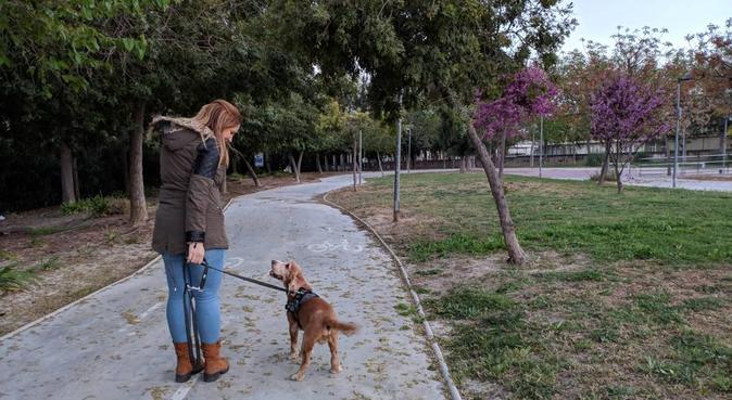 Amante de animales, canguro en Alicante