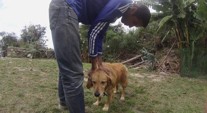 Paseador de Perros que se ajusta a tus necesidades, canguro en Madrid