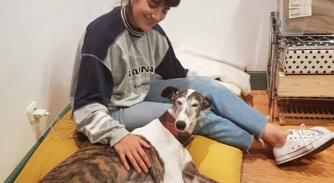Una casa perfecta para tu perro, dog sitter à Donostia-San Sebastián