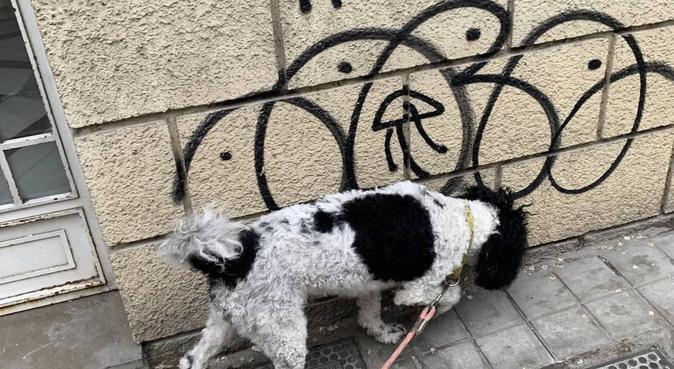 Amante de los perritos, canguro en Granada