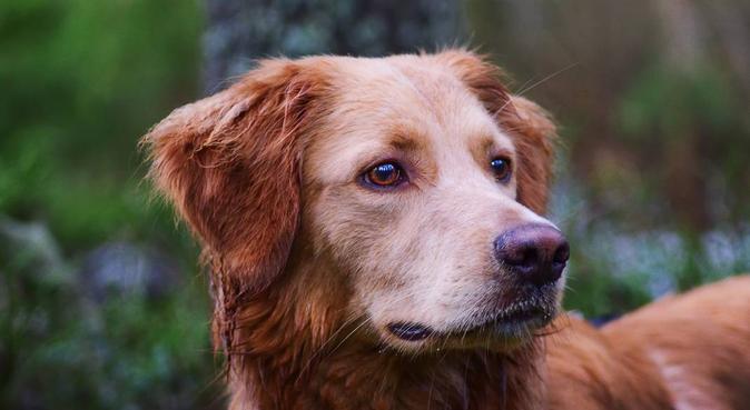Äventyrliga dagar i naturen för din fyrbenta vän, hundvakt nära AMAL