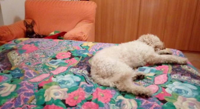 coccole e passeggiate divertenti con tata carmen!, dog sitter a Modena