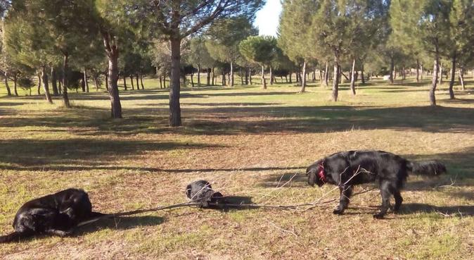 Vacaciones perrunas!, canguro en Alcorcón