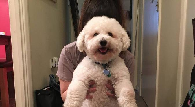 THE BEST THERAPIST HAS FUR AND 4 LEGS, dog sitter in Wallington