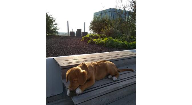 Veilige en gezellige loft met veel mogelijkheden, hondenoppas in Eindhoven