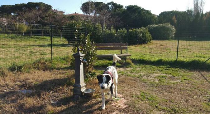 Casa Bonita per amici e più amici!, dog sitter a Montesilvano, PE, Italia