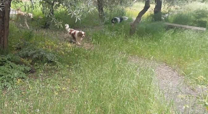 Coccole , Amore e tanto spazio per giocare, dog sitter a Catania, CT, Italia