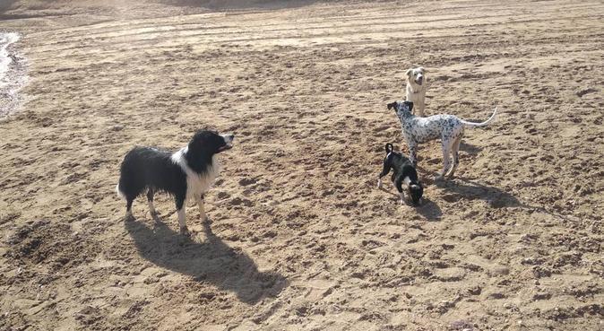 Cuidado de perrunos por las calas de torre, dog sitter in Torrevieja, España