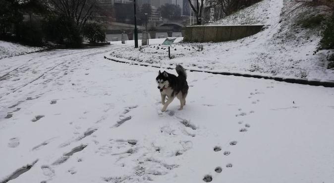 Dogsitter (Paris 5) et environ <3, dog sitter à Paris