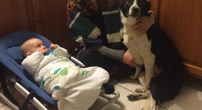 Paradise Dogs & Hugs, dog sitter à perpignan