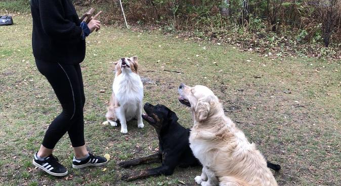 Hundens bästa vän!, hundvakt nära Jönköping