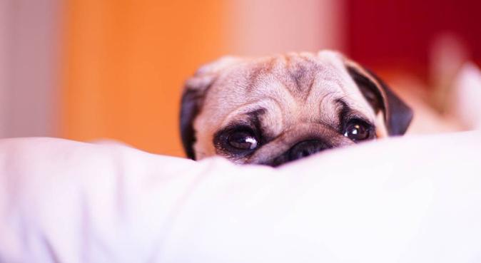 Una Casetta per amici a 4 zampe, dog sitter a Roma