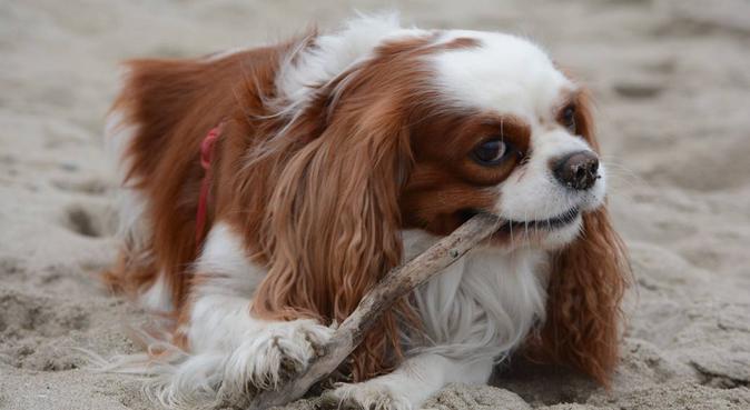 io: amore totalizzante per gli animali,la mia vita, dog sitter a Bologna