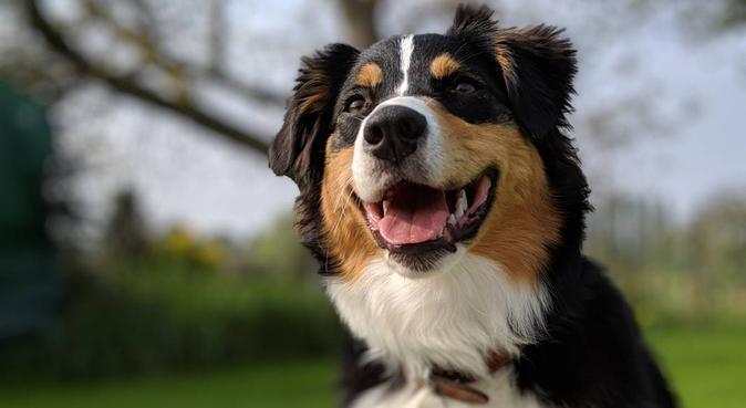 Gardiennage et balade de vos toutous d'amour, dog sitter à Villeneuve d'Ascq