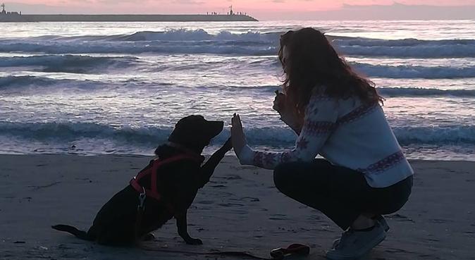 Passeggiate nel verde, coccole e divertimento!, dog sitter a Cusano Milanino, MI, Italia
