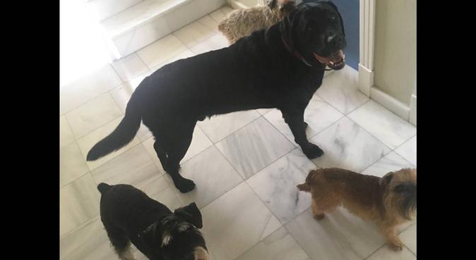 Tu perro estará como en casa, canguro en San Agustín del Guadalix
