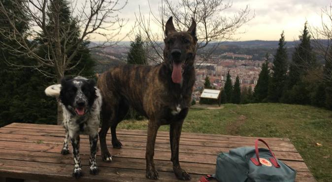 Paseos y obediencia básica. Educadora Canina., canguro en Bilbao