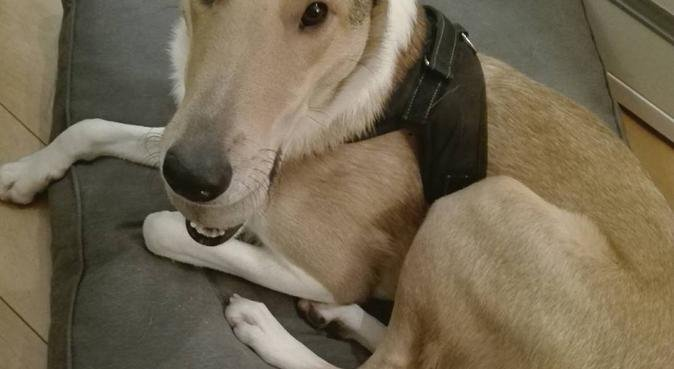 Liefdevolle hondenoppas in Amersfoort-Noord, hondenoppas in Amersfoort