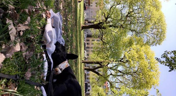 Aktiv student med mye erfaring! Glad i kos, hundepassere i Oslo