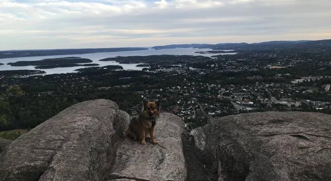 Elsker lange turer i skogen, lek og trening!, hundepassere i kolbotn