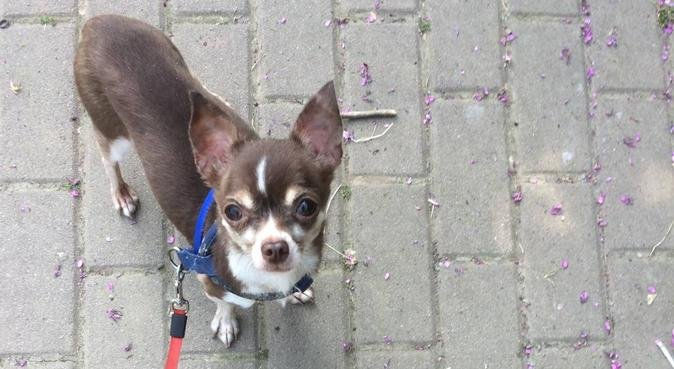 Cani e gatti: se non ci sei, ci penso io!, dog sitter a Milano