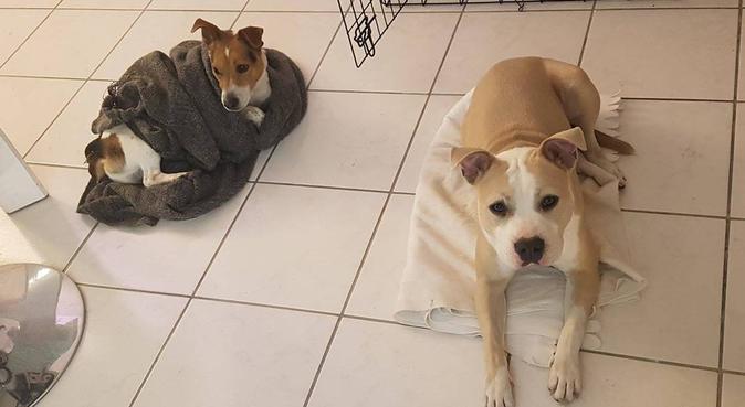 Hello dogs !, dog sitter à Fonbeauzard