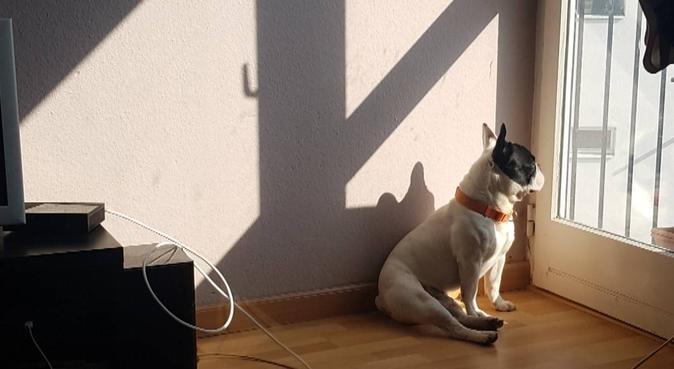 Amoureuse des chiens à Strasbourg, dog sitter à STRASBOURG