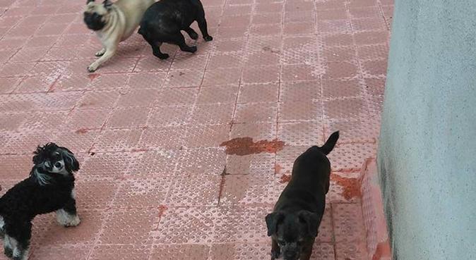 CANGURO PARA MASCOTAS!, canguro en San Pedro de Vilamajor