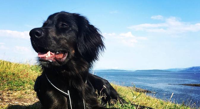 Fleksibel og ansvarsfull hundelufter!, hundepassere i Bodø